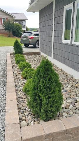 Rock Mulch & Plants