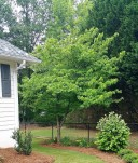 Side Yard, Trees, Plants & Sod