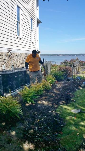 Clean up & Mulch