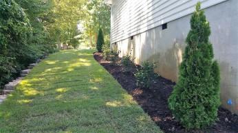 Zoysia sod & foundation plantings
