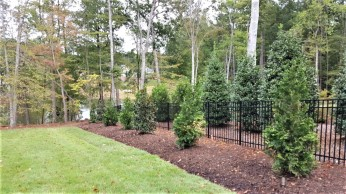 Green Giant Arborvitae & Little Gem Magnolia